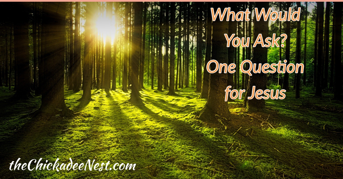 What One Question would you ask Jesus?